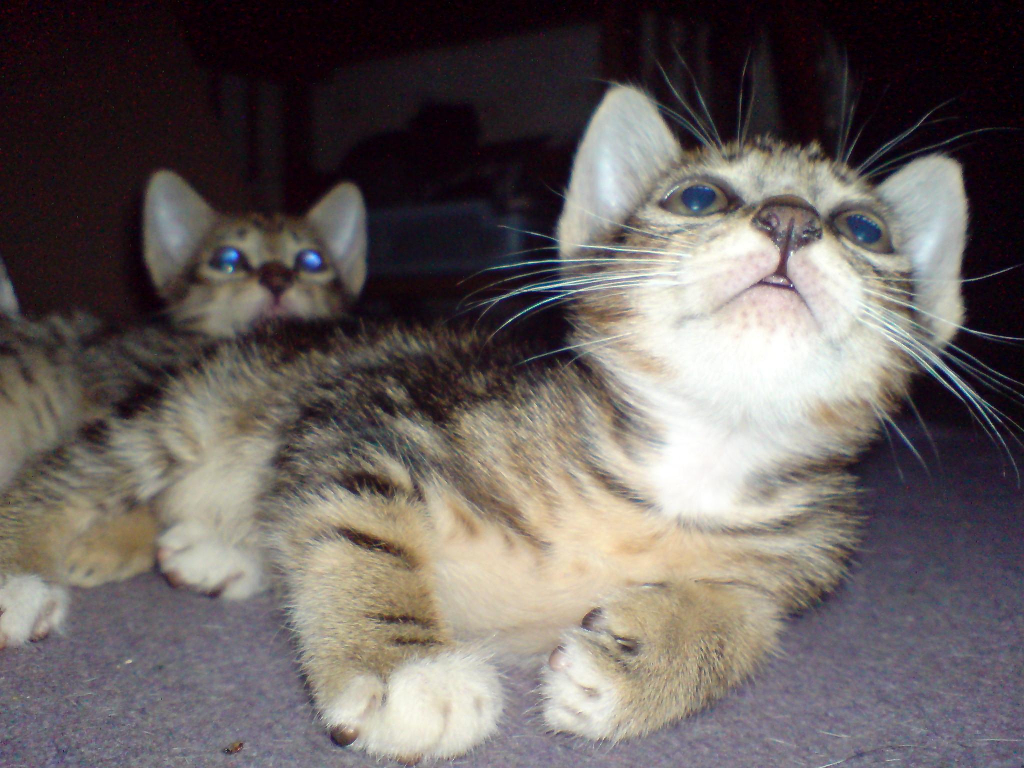 Ini Cerita Kucingku Mana Cerita Kucingmu Bennythegreat